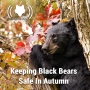 Artwork for Keeping Black Bears Safe In Autumn