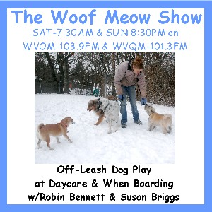 Off-Leash Dog Play at Daycare and Boarding Kennels with Robin Bennett and Susan Briggs