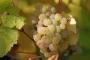 Artwork for Ep 088: The Grape Miniseries: German Riesling w Expert Stuart Piggott (Part 2)