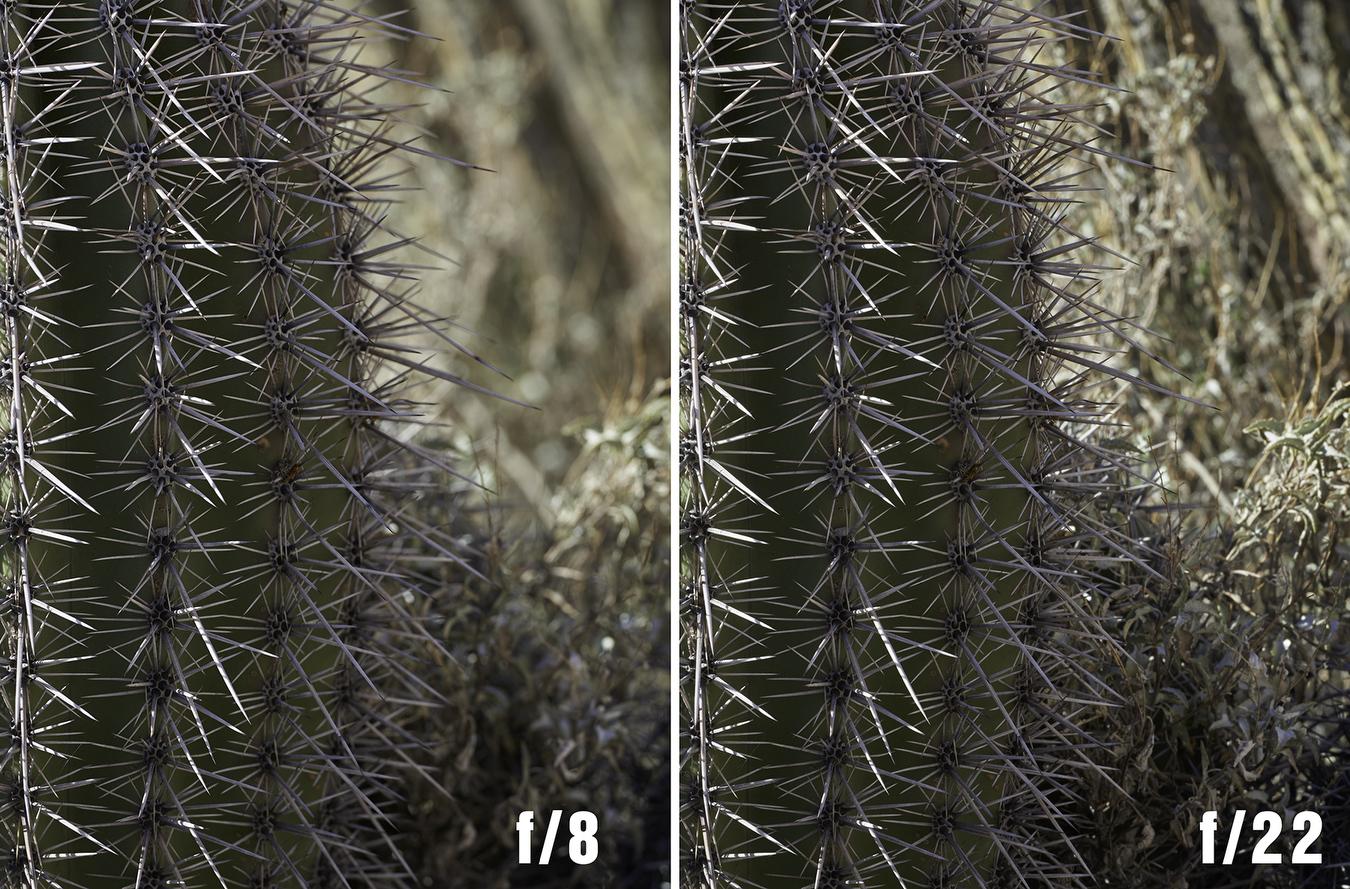 saguaro full