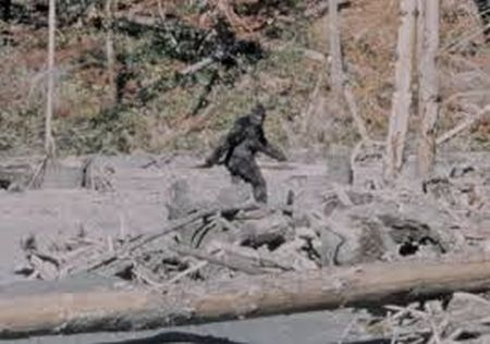Episode 274 - Bigfoot, Sasquatch, Yeti. Cryptozoology Chat with Wayne, Brad, Quinn and Brian.