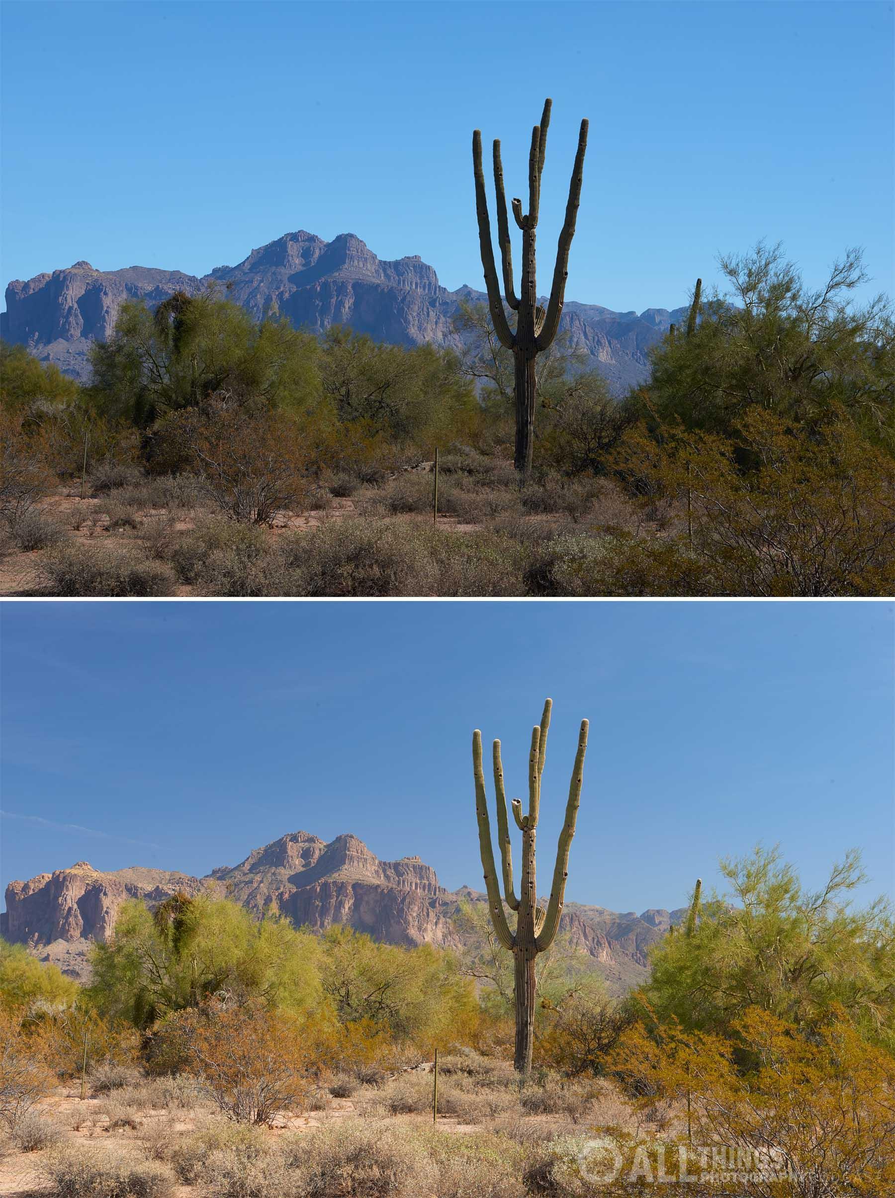 saguaro polarizer