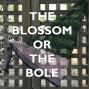 Artwork for The Sweater: The Blossom or the Bole
