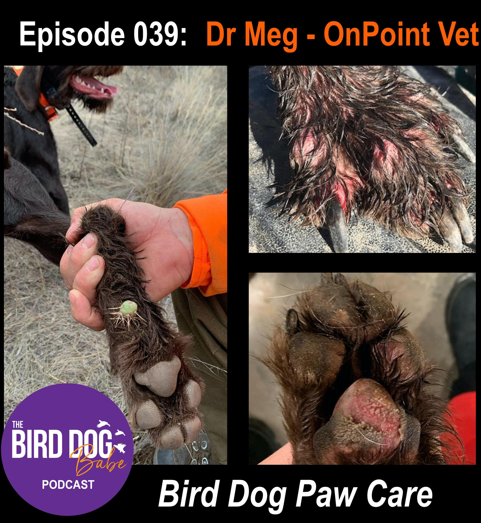 Episode 039: Bird Dog Paw Care w/ Dr Meg