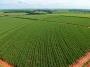 Artwork for Biogás – nova energia para o setor de açúcar e etanol