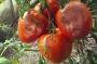 Artwork for 62 Ympa tomat