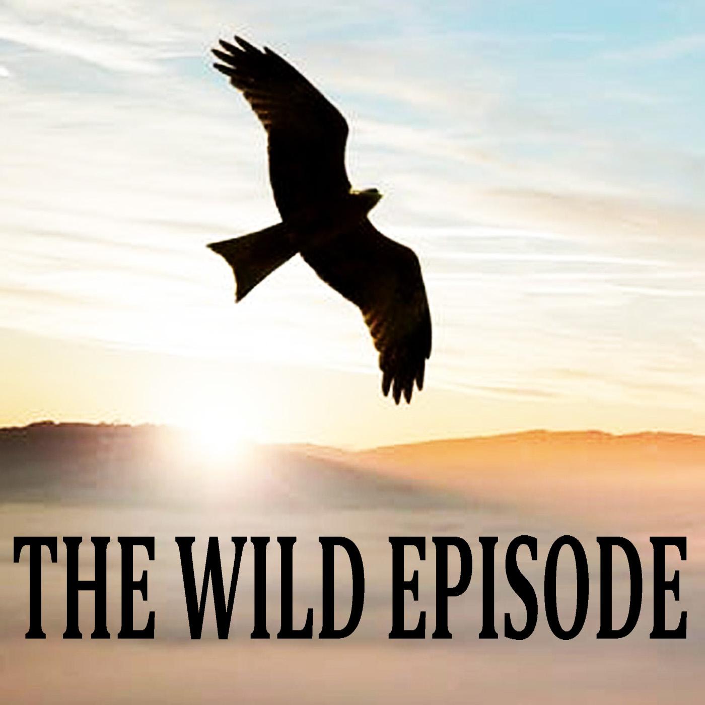 The Wild Episode show art