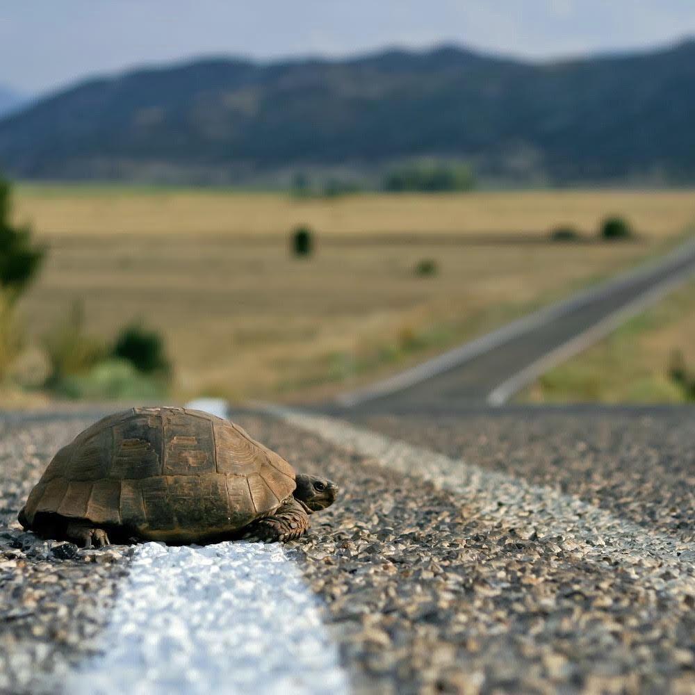 254: Slow living