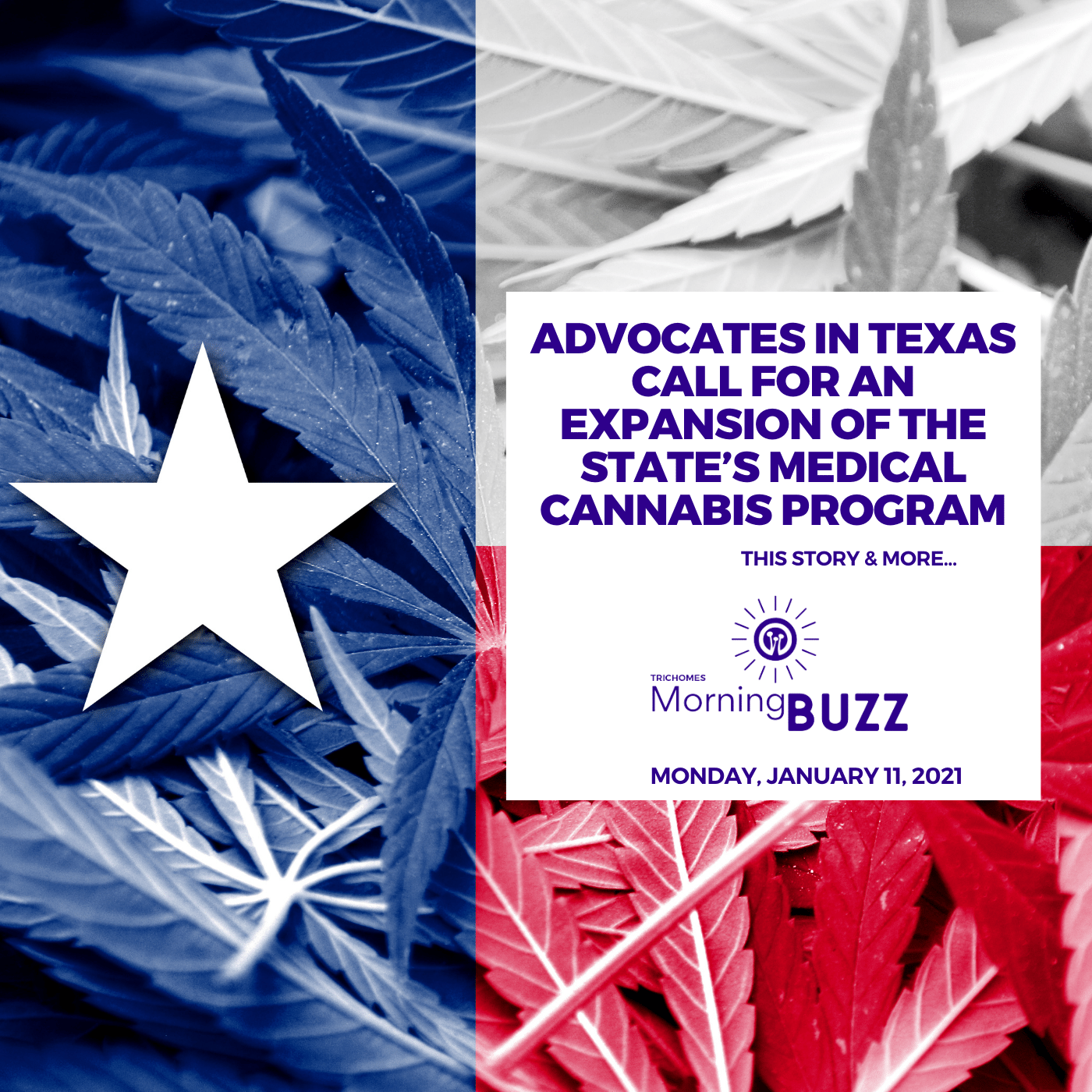 Advocates in Texas Call for an Expansion of the State's Medical Cannabis Program | TRICHOMES Morning Buzz show art