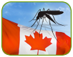 Zika Virus Awareness for Canadian Workers