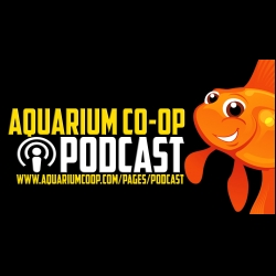 Real Fish Talk by Aquarium Co-Op: My Bucket List for Fish Keeping [Live Stream]