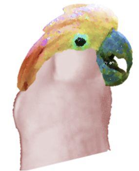 No, Your Cockatoo