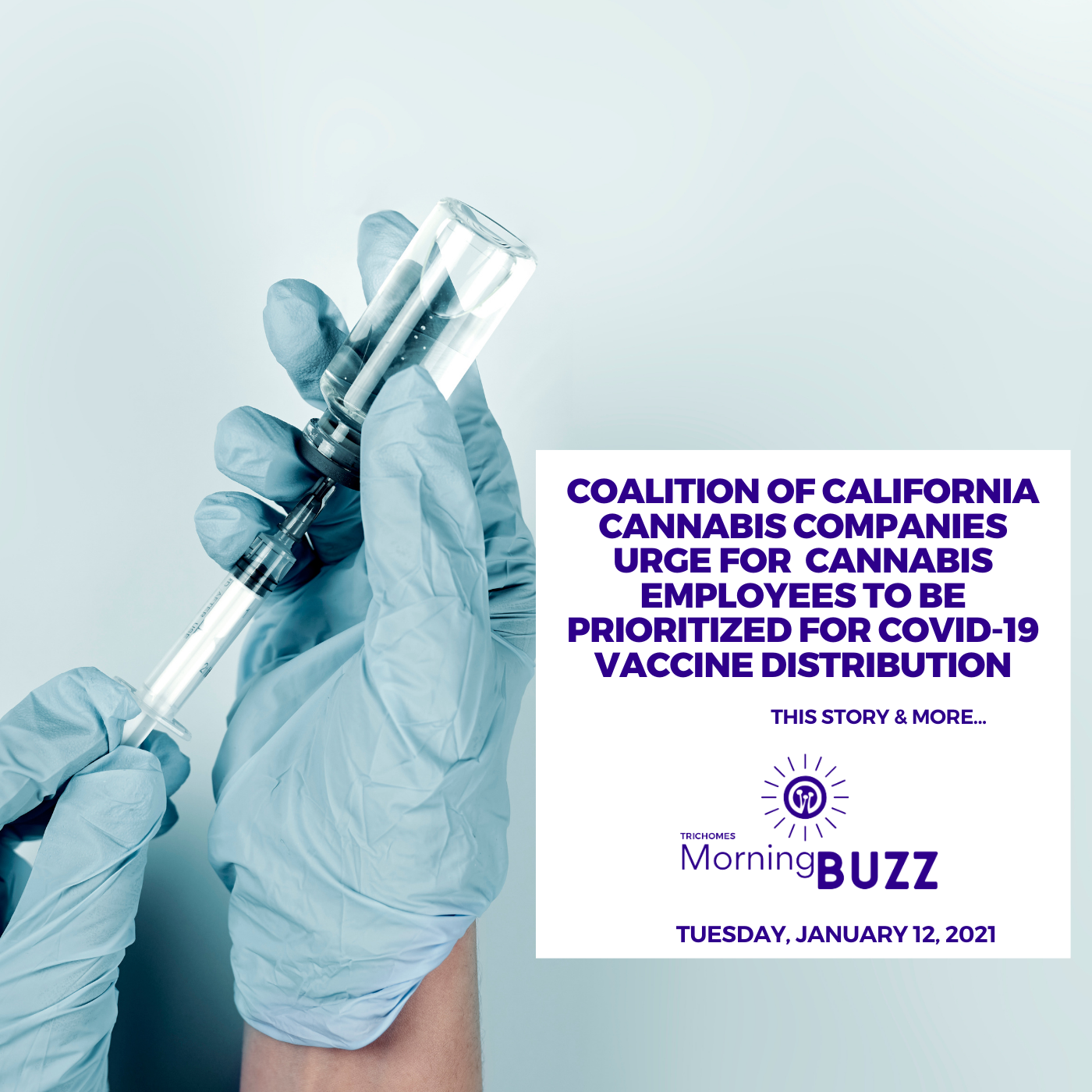 Coalition of California Cannabis Companies Urge for Cannabis Employees to be Prioritized for COVID-19 Vaccine Distribution | TRICHOMES Morning Buzz show art