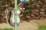 Artwork for  CST #446: Squirrels on a Greased Pole