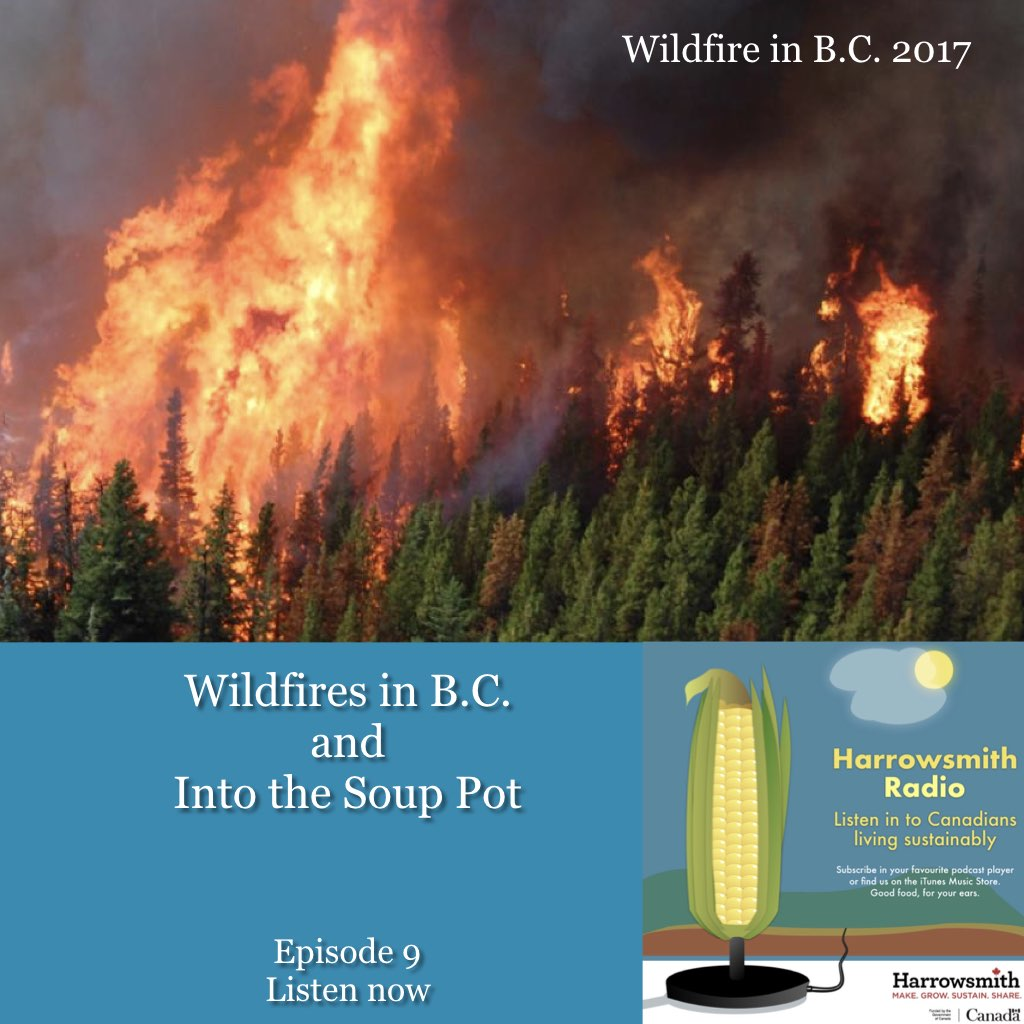 From the Wildfire Into the Soup Pot