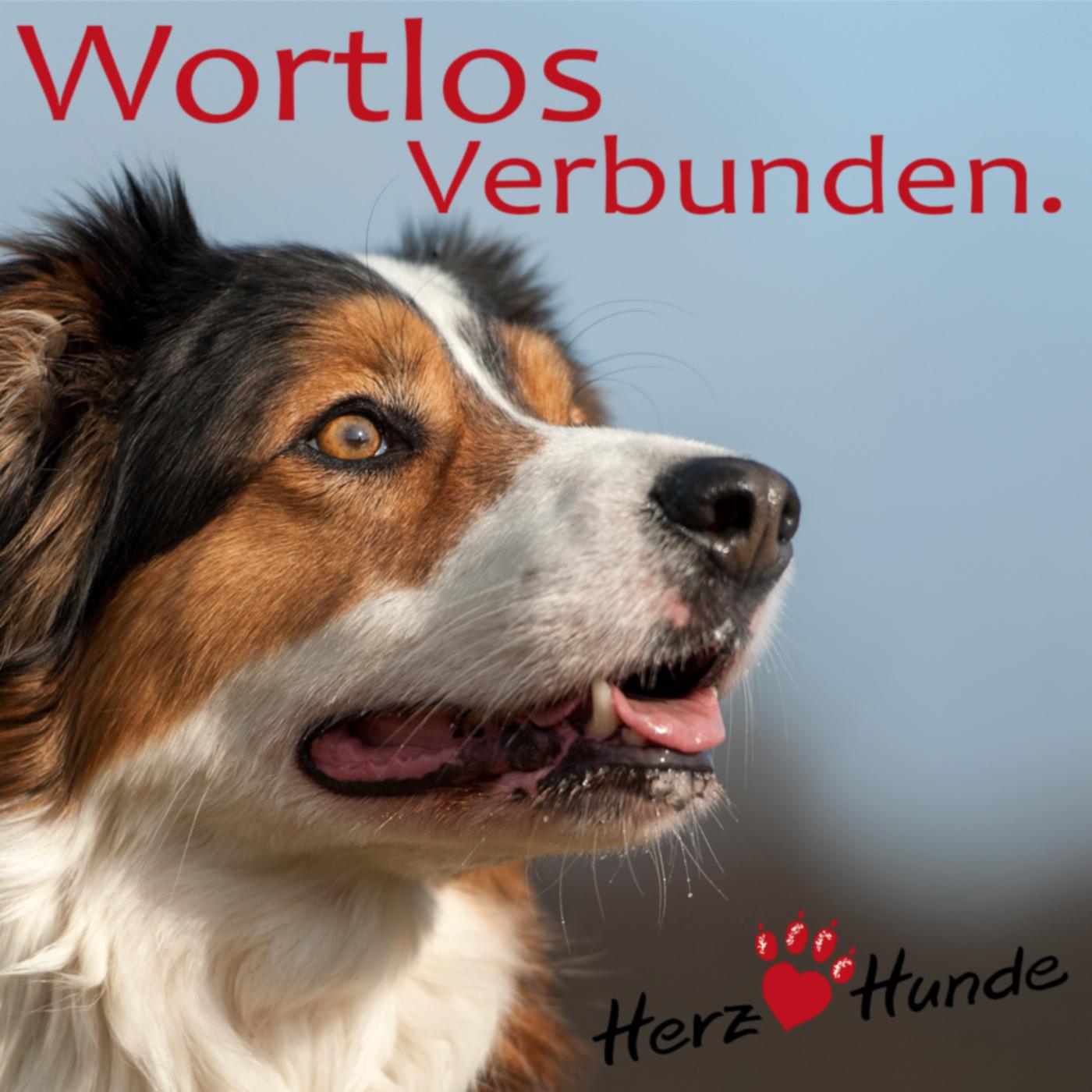 Deine Gassi-Runde als Heldenreise > mit Deinem Hund wortlos verbunden! show art