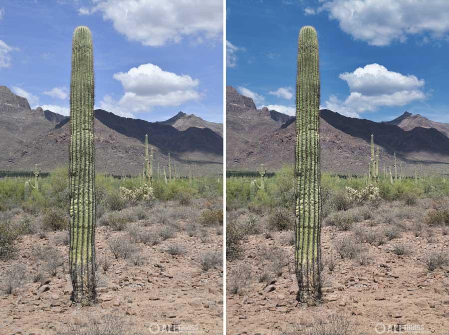 saguaro spike