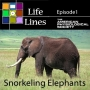 Artwork for Episode 1: Snorkeling Elephants