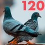 Artwork for #120 - As the Pigeon Flies