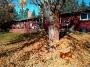 Artwork for Ep23 - Fall Weeding Tips & Effortless Leaf Clean Up