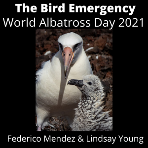 037 World Albatross Day 2021 - Translocations in Mexico with Federico Mendez from GECI Conservacion de Islas and Dr. Lindsay Young, Executive Director of Pacific Rim Conservation