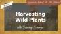 Artwork for Sunny Savage: Harvesting Wild Plants