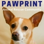 Artwork for 44: Tebow the Wonder Dog Got Adopted! Nancy and Harold discuss