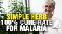 Artwork for Malaria 100% CURE RATE using this ancient herb
