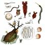 Artwork for 48 - Micrographia