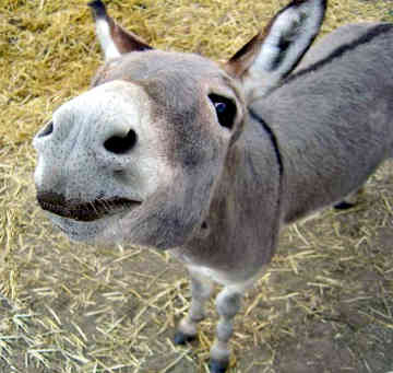 PSNerds Episode 57: Swamp Donkey
