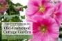 Artwork for How to Design a Cottage Garden