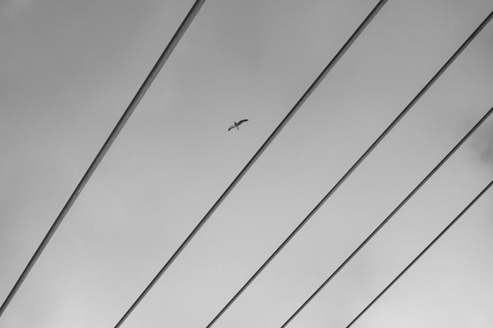 bird soaring across segmented sky.