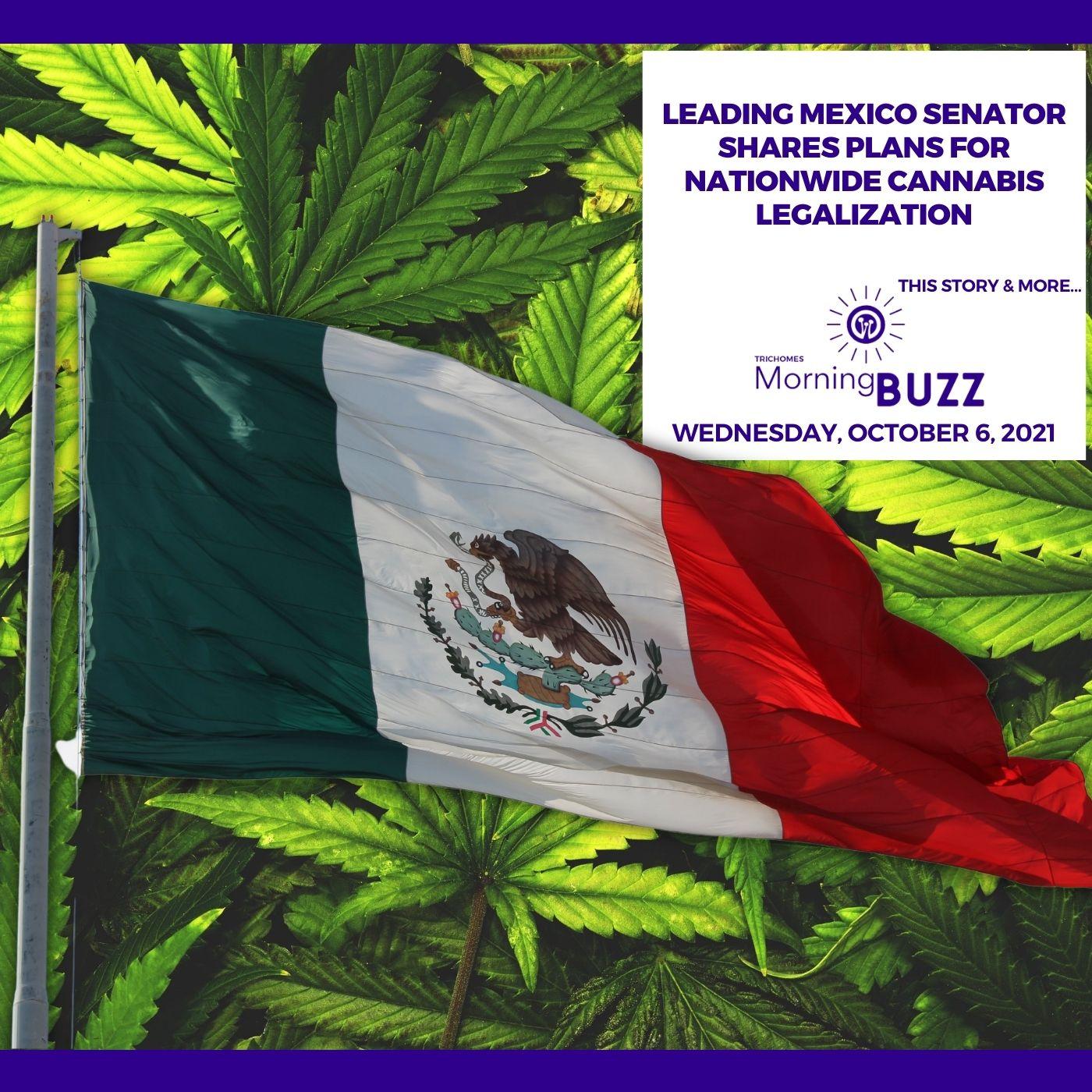 Leading Mexico Senator Shares Plans For Nationwide Cannabis Legalization show art