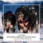 Artwork for Iditarod Through the Decades 1990s