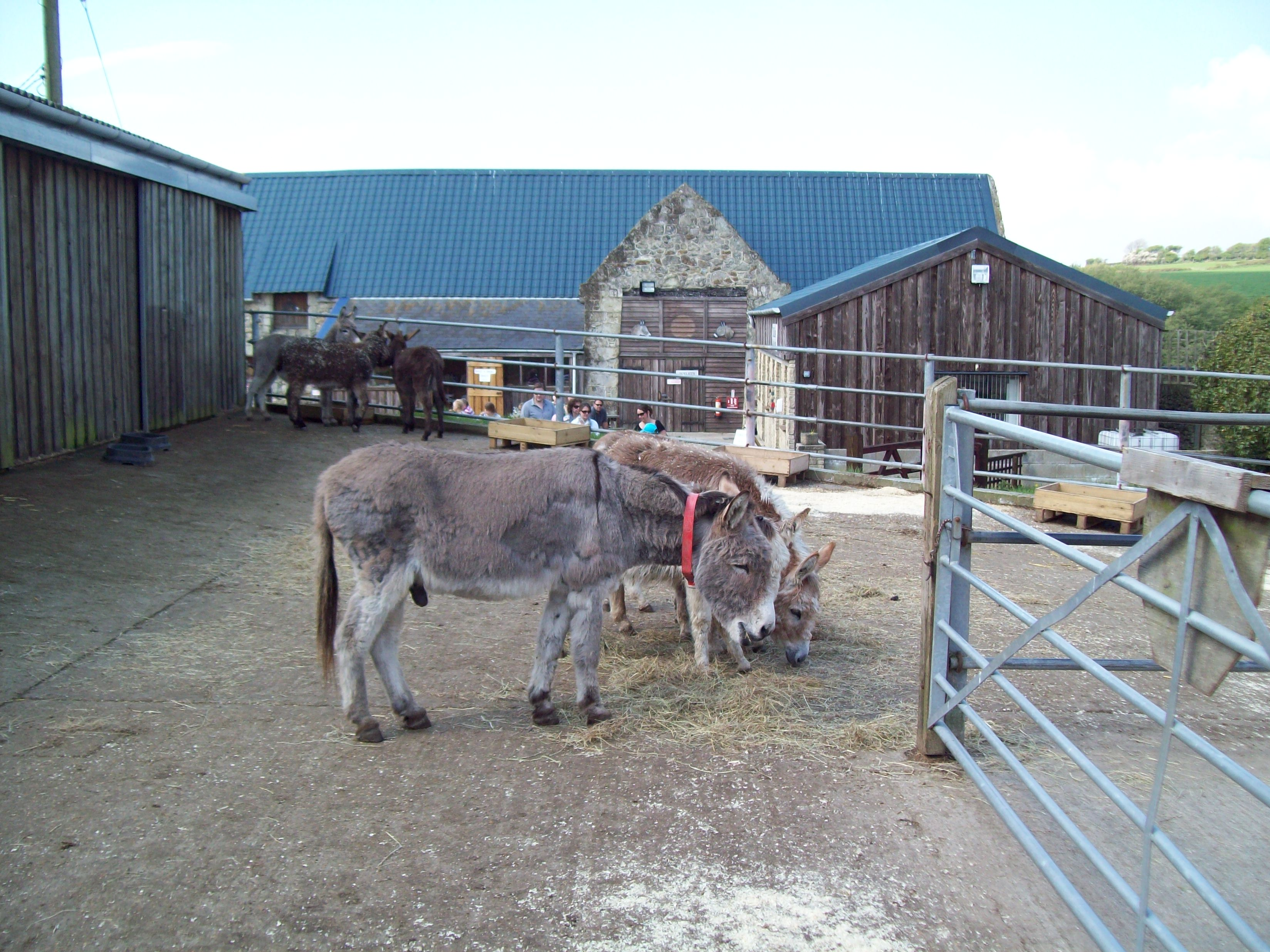The Isle of Wight Donkey Sanctuary : Episode 2.5