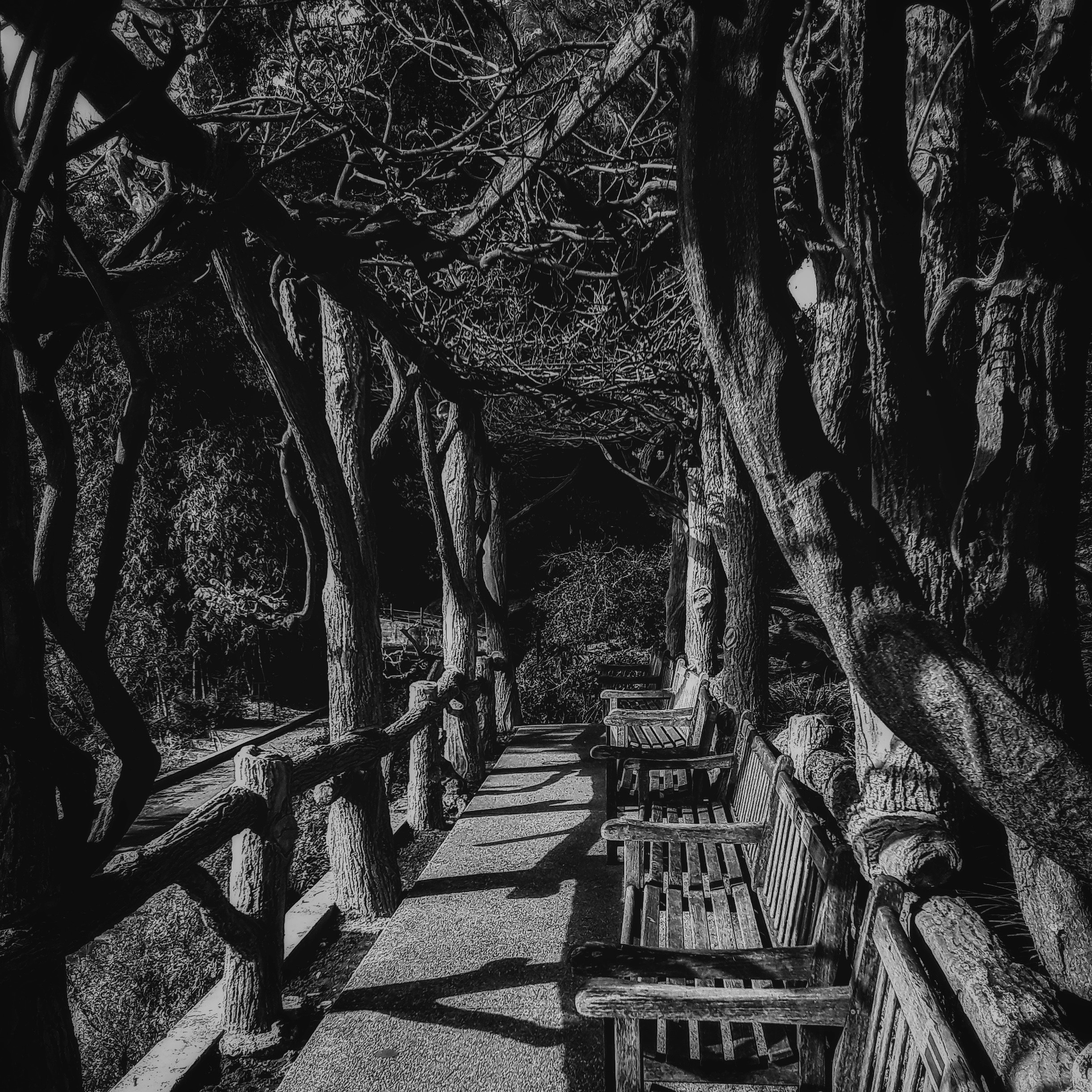 black and white photograph of rustic park benches