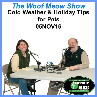 Cold Weather and Holiday Tips for Pets-2016