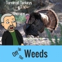 Artwork for Terrorist Turkeys & Therapy | Off in the Weeds 014
