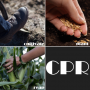 Artwork for CPR: Cultivating