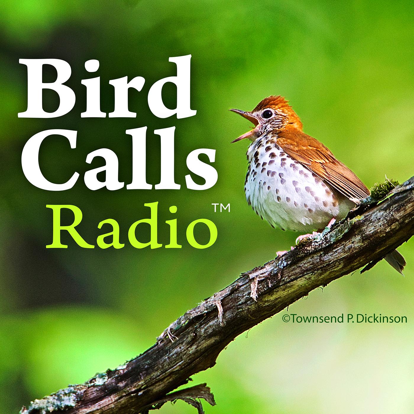 BirdCallsRadio show art