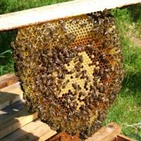 Slow Beekeeping: Adebisi Aderkunle on top bar beekeeping in Nigeria