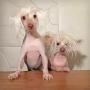 Artwork for 102: Ellen Westkaemper, Bald is Beautiful Dog Rescue + Dancing Nathan