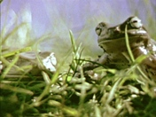 Ben Peters  - Frog Jesus