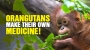 Artwork for Orangutans make their own natural MEDICINE