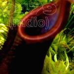 9479 Radio #98: Re-Define Success.