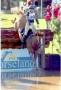 Artwork for 394: Jonna McLean 3 LC - Ten Steps for Further Foal Handling