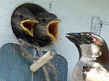 RTX001-Bird Feeding