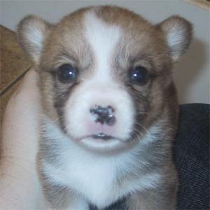 #225 - Puppy