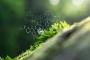 Artwork for 039-Nature, Evolution, Spirituality