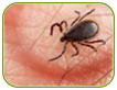 Parlons de la maladie de Lyme